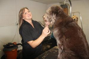 Tammy West Chicago dog groomer