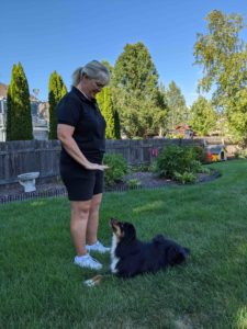 Dog trainer giving the dog a command to stay.